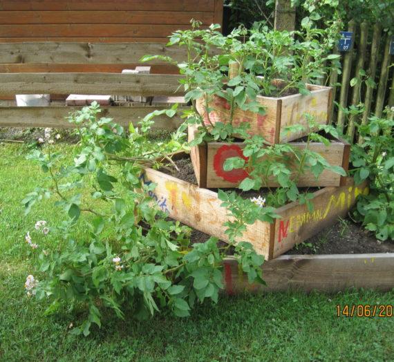 Schule Gartenaktion