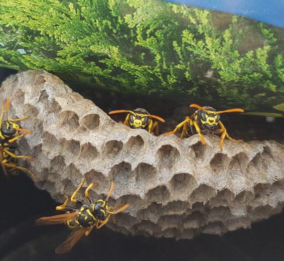 Über die Vielfalt der Wildbienen